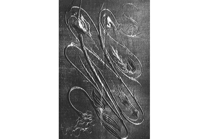 6 Art And Crafts E Introduzione All Art Nouveau