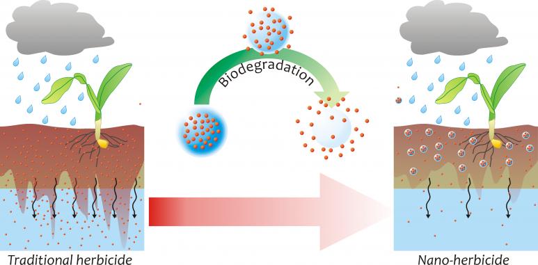 Nanograss